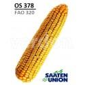 Seminte porumb OS378 - Saaten Union (FAO 370)