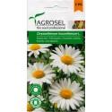 Seminte flori Margarete Perene Agrosel - 2 gr.