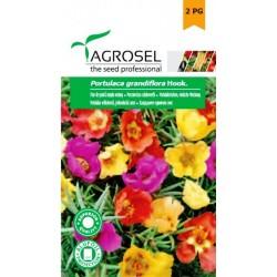 Seminte Flori Piatra simplu melanj Agrosel - 0,6 gr.