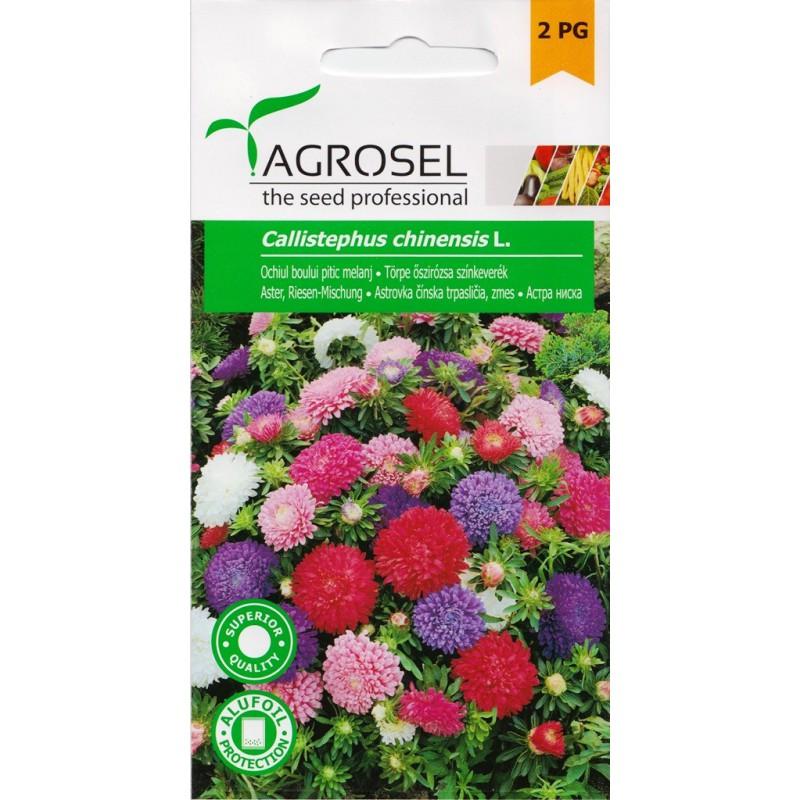 Seminte Ochiul Boului pitic Agrosel - 1 gr.