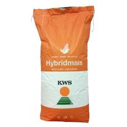 Samanta porumb KWS 2370 - 50.000 boabe