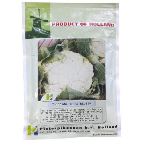 Seminte conopida Herfstreuzen PPZ Olanda - 25 gr.