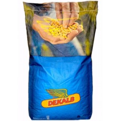 Seminte porumb Dekalb DKC 4351 - 80.000 boabe