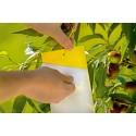 Capcana lipicioasa pentru insecte galbena L