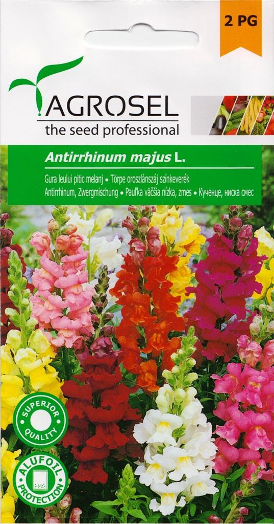 Seminte de flori Gura Leului Agrosel - Verdon