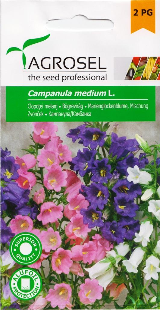 Seminte flori clopotei melanj Agrosel - Verdon