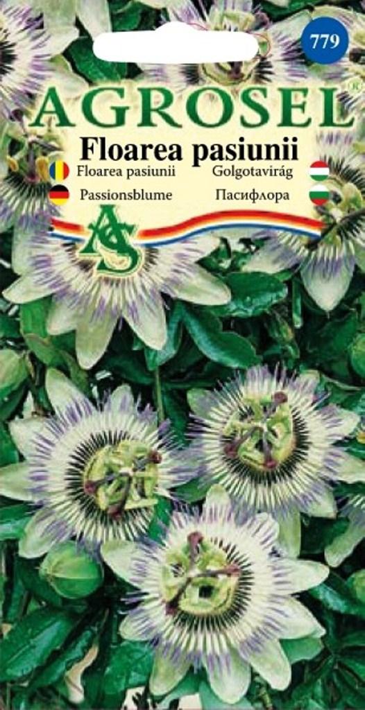 Seminte flori Floarea Pasiunii Agrosel - Verdon