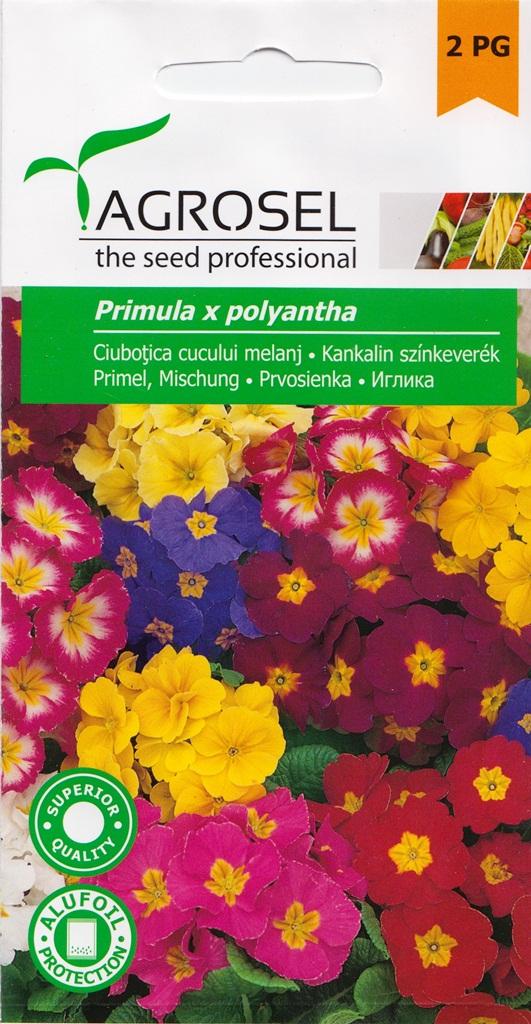 Seminte flori Ciubotica Cucului melanj Agrosel - Verdon
