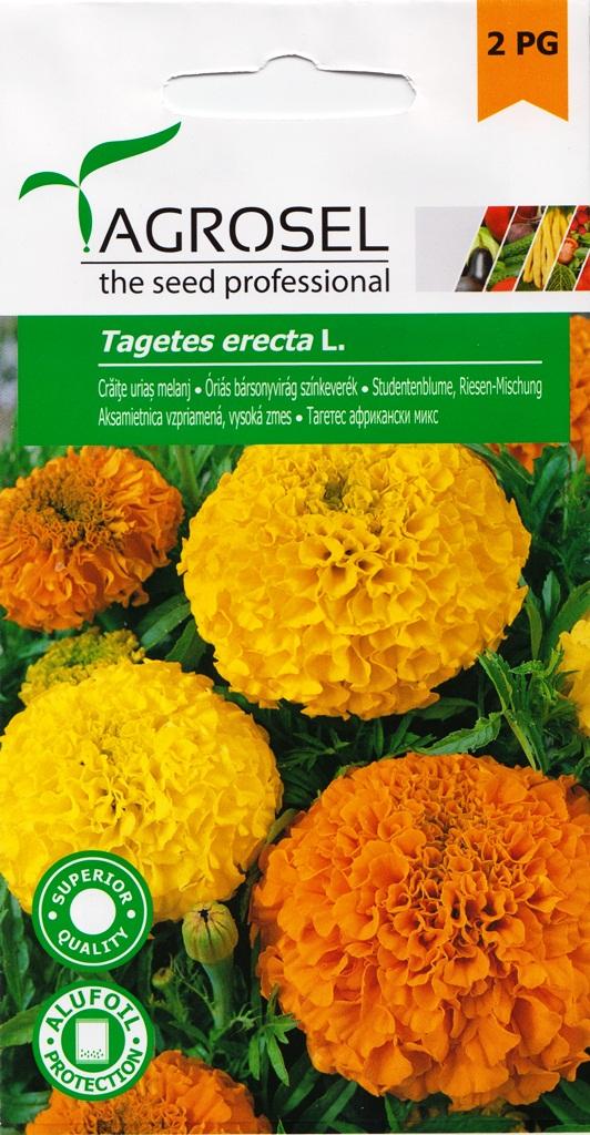 Seminte flori Craite uriase Agrosel - Verdon