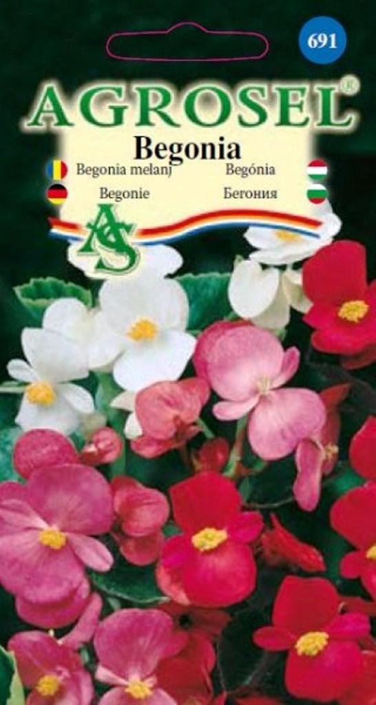 Seminte flori Begonia melanj Agrosel - Verdon