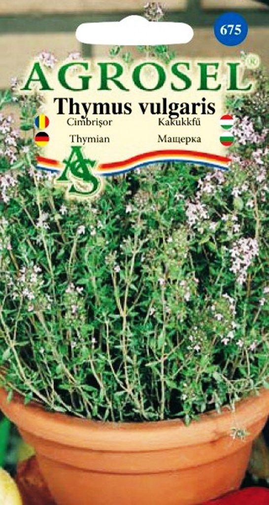 Seminte de cimbrisor - Agrosel
