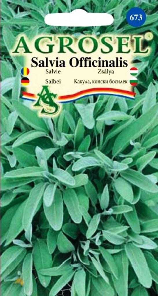 Seminte de salvie Agrosel - Verdon