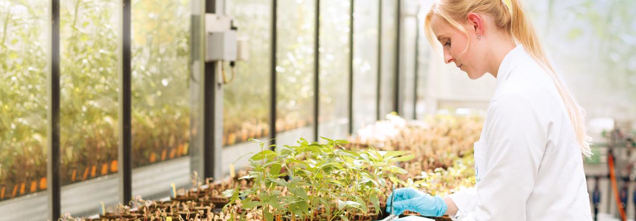 Bayer CropScience - cercetare