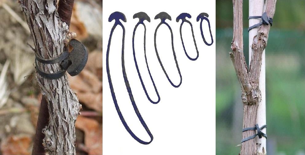 Guma de legat elastica pentru legat via si pomii - Verdon