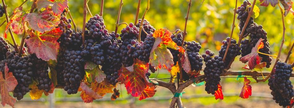 Solutia completa pentru viticultura