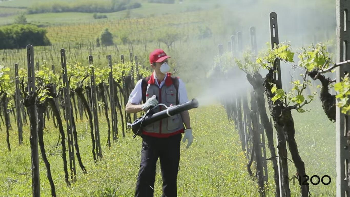 Atomizor Cifarelli in viticultura - Verdon