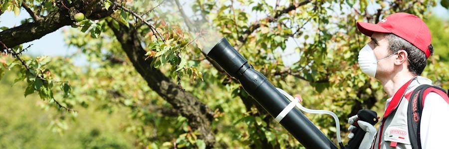 Atomizor Cifarelli M3A - Verdon