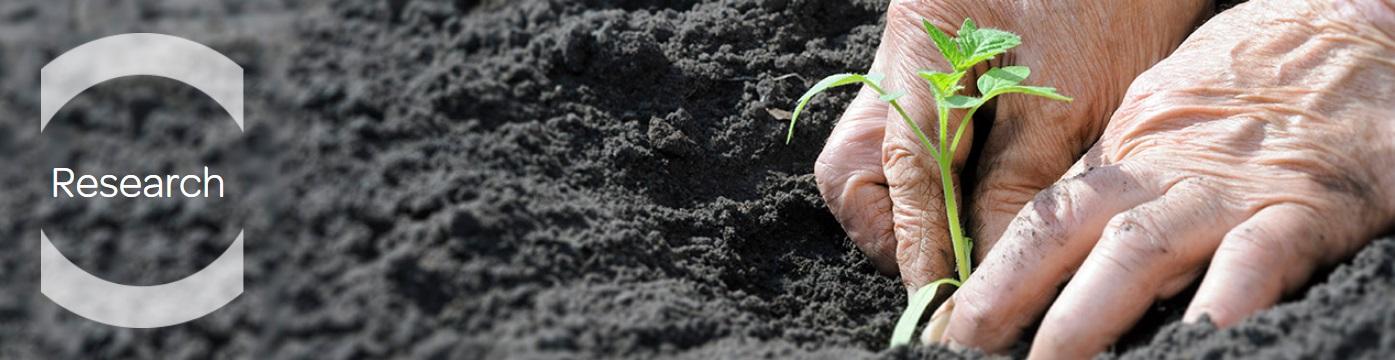 Clause - producator de seminte de legume focusat pe cercetare
