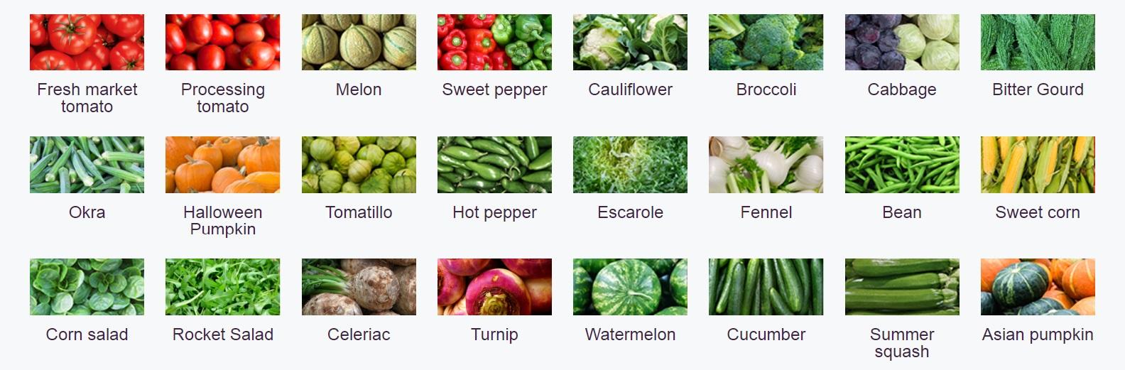 Clause - o gama vasta de seminte de legume