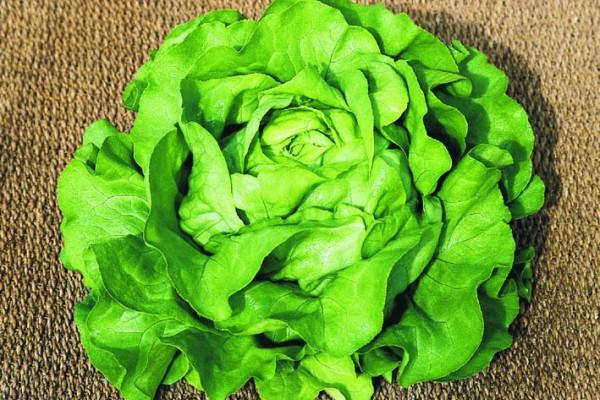 Verdon - Seminte salata Sandrine (Clause)
