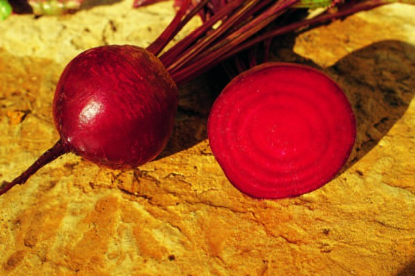 Seminte sfecla rosie Detriot Clause