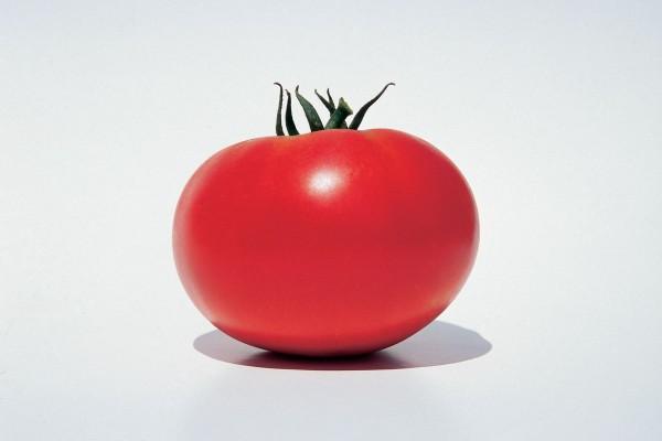 HIbrid tomate Leonora F1 Clause