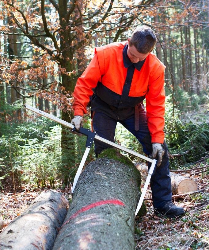 Clupa forestiera Nestle Waldmeister masurand