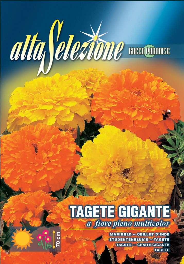 Craite gigante - Flori pline multicolor