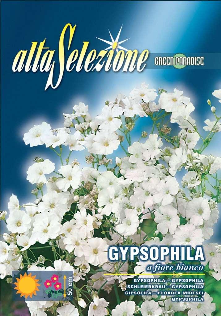 Floarea miresei - Flori albe