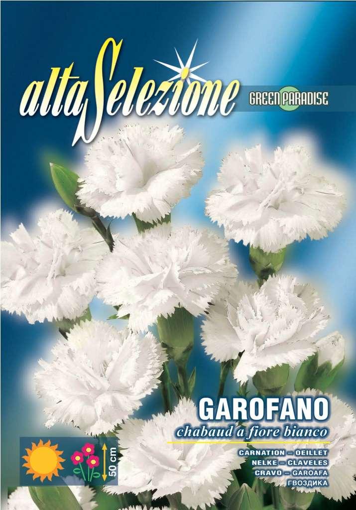 Garoafa Flori albe