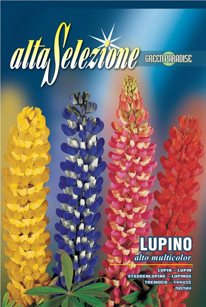 Lupin Inalt multicolor