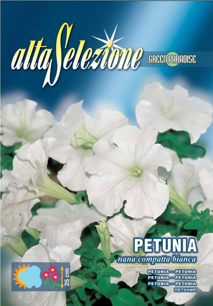 Petunia - Pitica compacta alba