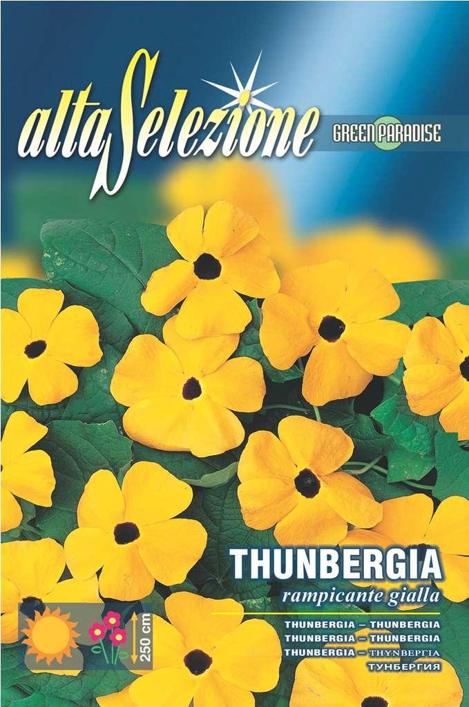 Thumbergia Cataratoare galbena