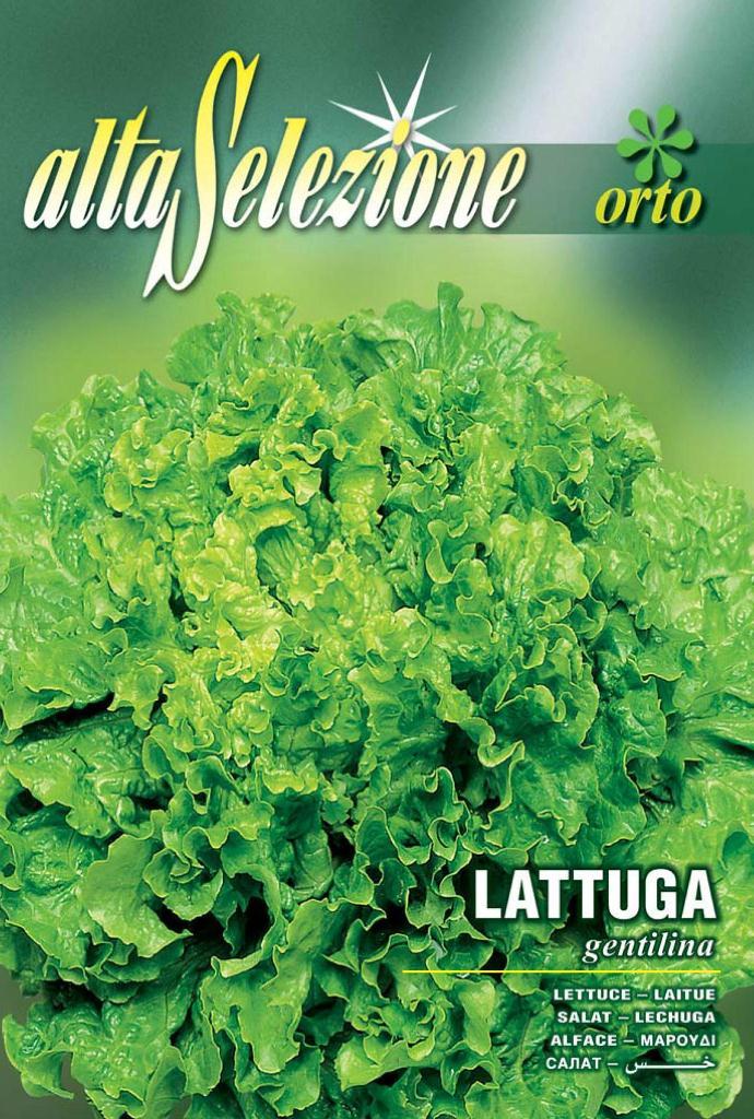 Seminte salata creata Gentilina - 6 gr.