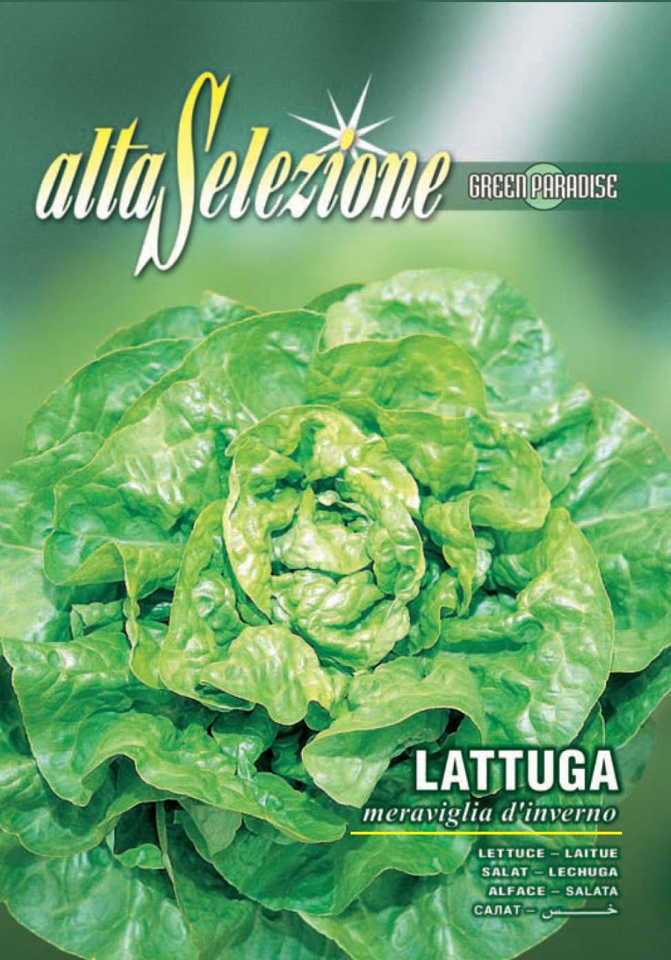 Salata de capatana Meraviglia D'Inverno - 8 gr.