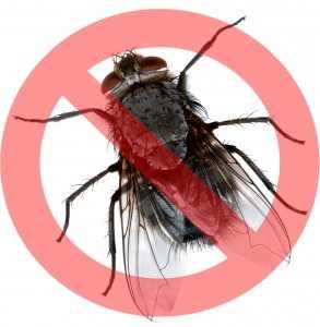 Insecticid Agita 10 WG