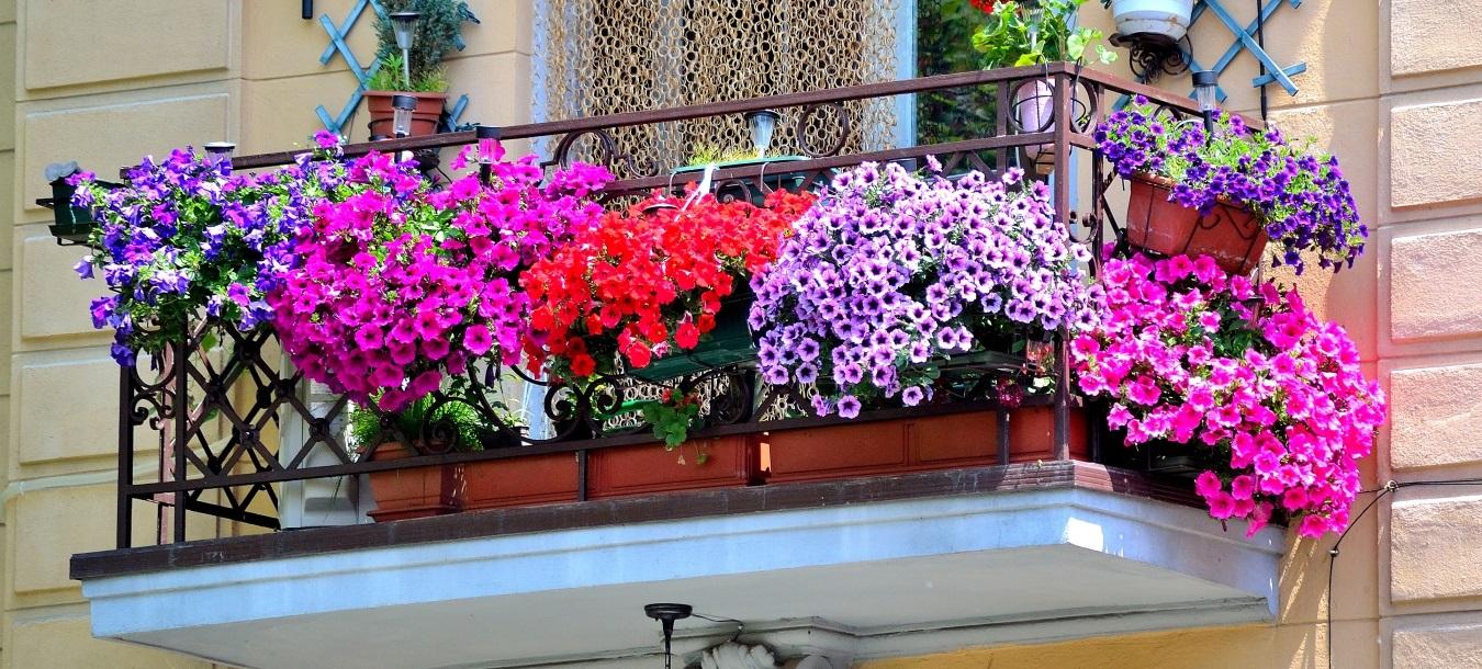 Ingrasamant flori de balcon