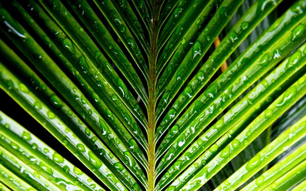 Ingrasamant plante verzi