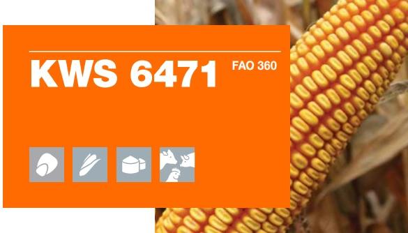 Verdon - Logo KWS 6471