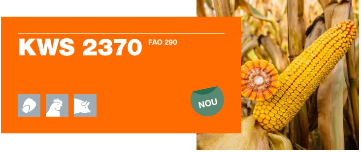 Verdon - Samanta porumb 2370 KWS