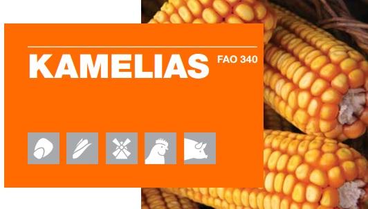 Logo KWS Kamelias