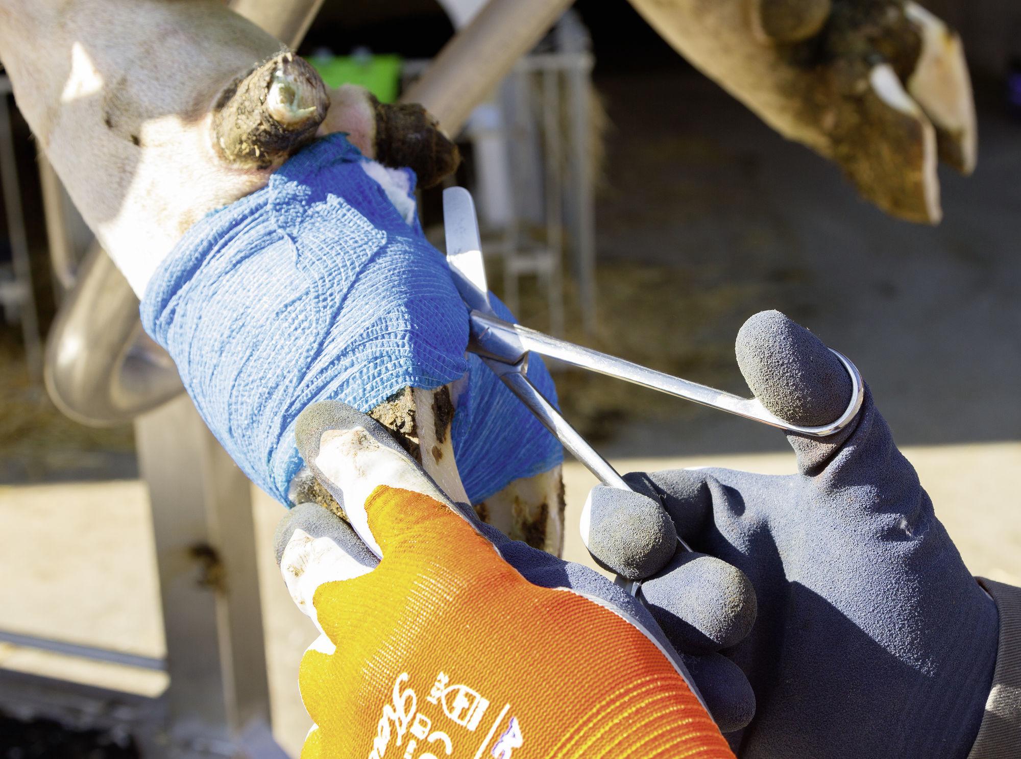 Foarfeca din otel inoxidabil pentru pansamente - 145 mm