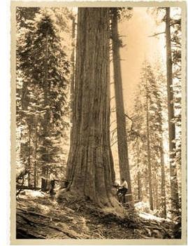 Oregon - scurt istoric primul lant