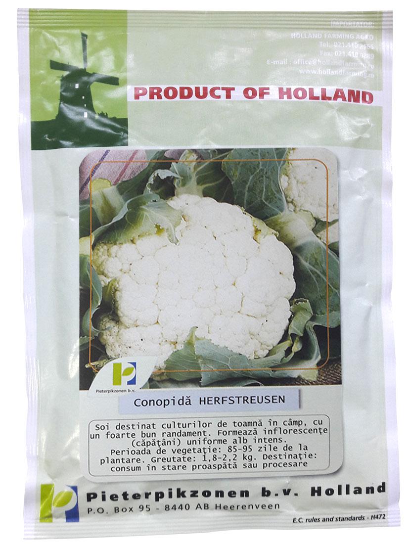 Verdon - Seminte conopida Herfstreuzen PPZ Olanda