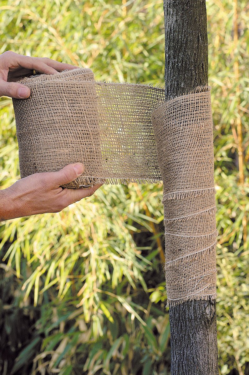 Fasa biodegradabila pentru bandajare pomi din iuta Protec 0.15 x 25 m