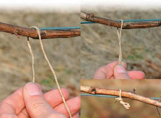 Sfoara de legat biodegradabila Padrafix 1,5 mm - 15 cm