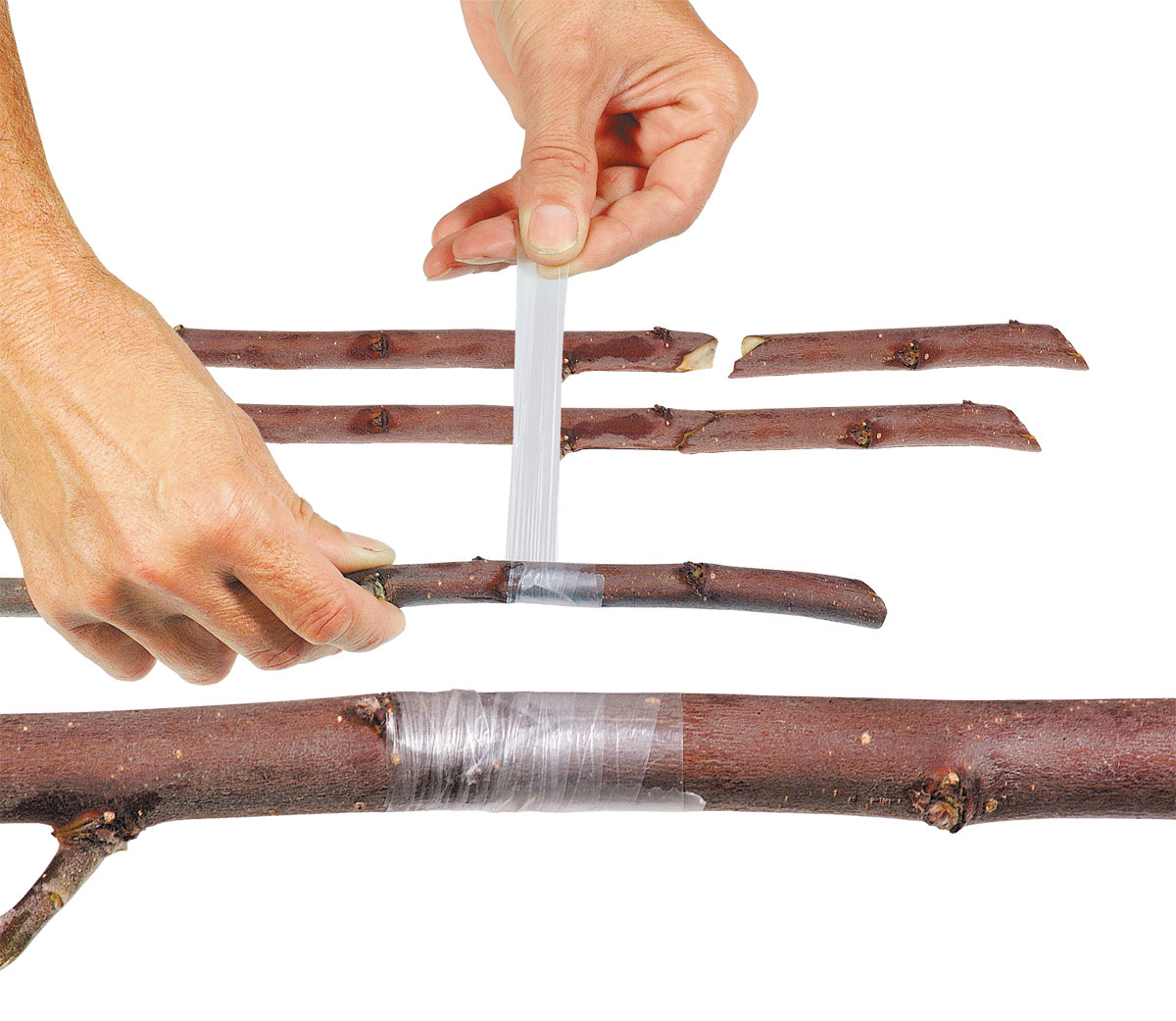 Banda pentru altoit Stocker fara perforatii