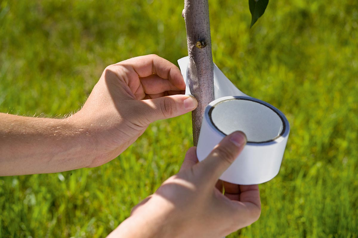 Benzi lipicioase Stocker pentru insecte 5 m x 5 cm