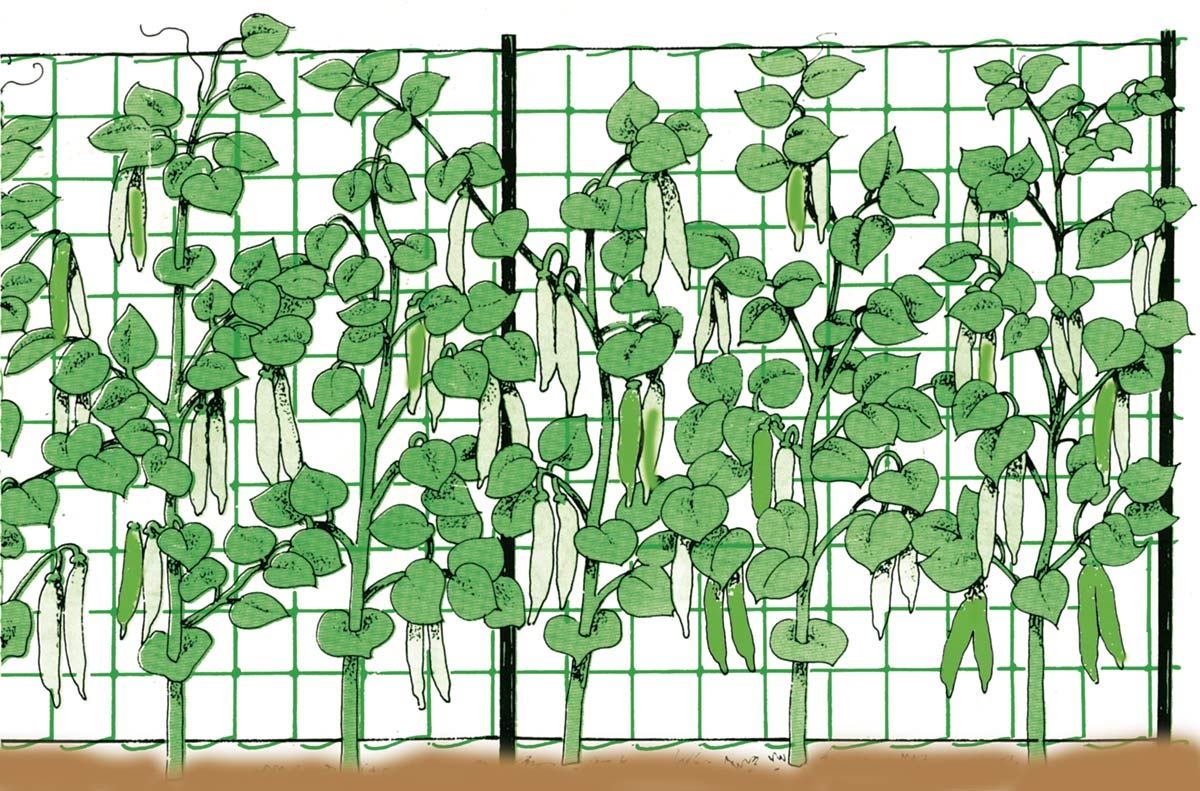 Caracteristicile plasei pentru plante cataratoare Stocker (2 x 25 m)