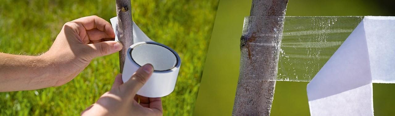 Capcane pentru insecte